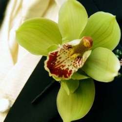 """Exotic orchid"" boutonniere"
