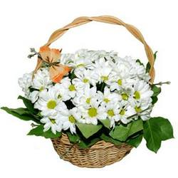 "Basket of сhrysanthemums ""Blonde"""