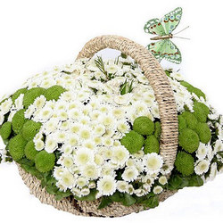 "Basket of сhrysanthemums ""Spring Meadow"""